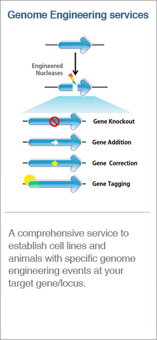 Cell line Engineering Service